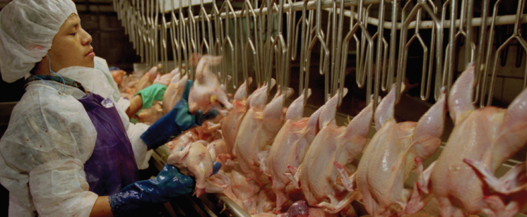 eFeedLink - Brazilian poultry's diminished expectations
