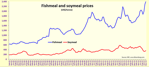 Fish meal prices