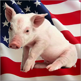 Good times, bad times and great uncertainty in America's swine sector