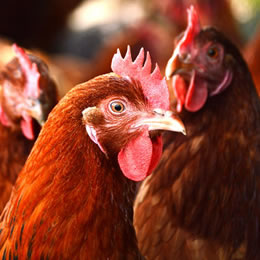 New strain of bird flu detected in China