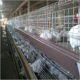 Pakistan poultry industry faces collapse on mounting losses