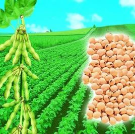 World soy importers in US for four-day meet