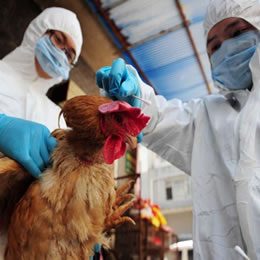 Reoccurrences of bird flu detected across Asia