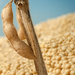 Waiting for soy to face reality: A long distance view of this year's grain market