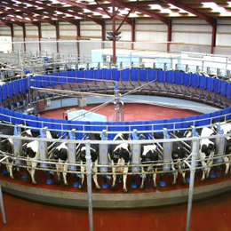 'Shakeup' in ranking of top dairy firms, but Nestle remains on top