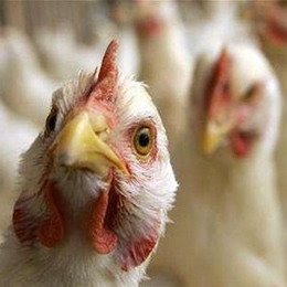 Reoccurrences of highly pathogenic avian influenza virus detected in Asia, Europe and the Americas