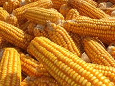 Philippine corn supplies and feed demand