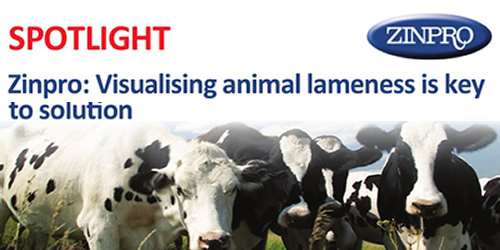 Zinpro: Visualising animal lameness is key to solution