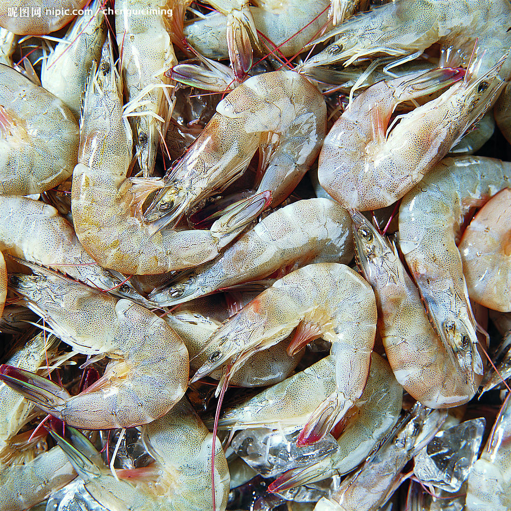 Bangladesh to boost black tiger shrimp export to US