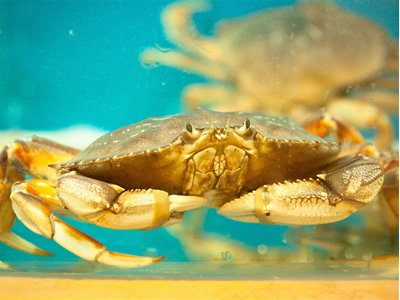 China agrees to resume live crab imports from Ireland
