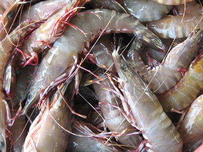 Vietnam shrimp prices see overall rise in Mar