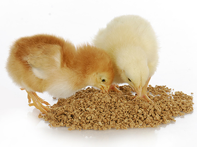 Poultry-driven Indonesian feed and livestock takes off