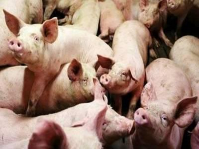 A review of the effects of dietary organic acids fed to swine