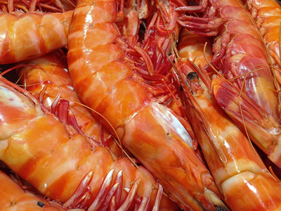 US reports no refusals for antibiotic-laced shrimp imports in July