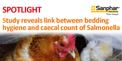 Study reveals link between bedding hygiene and caecal count of Salmonella