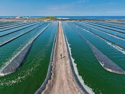 Intensive shrimp farming better for environment, says WWF study