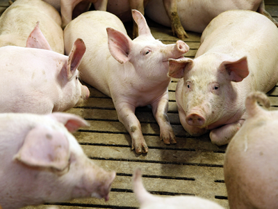 Pigs and chickens, fish and milk: Europe's emerging agribusiness exporting machine