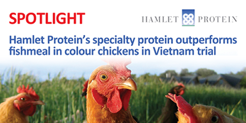 Hamlet Protein's specialty protein outperforms fishmeal in colour chickens in Vietnam trial