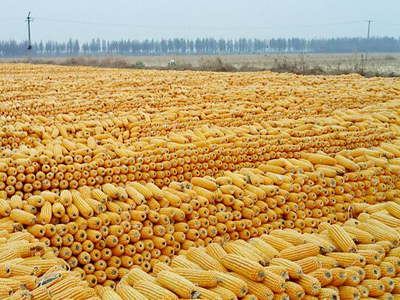 Big corn importer-in-waiting? The long-term implications of China's corn market liberalization