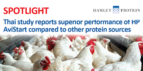 Thai study reports superior performance of HP AviStart compared to other protein sources