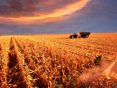 EU cereal production recovers - report