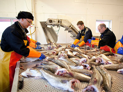 January - March best quarter ever for Norway cod exporters