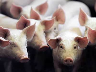 Thailand to reduce antibiotics use in livestock