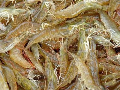 US rejects 2 antibiotic-laced, 12 salmonella-contaminated shrimp imports in July