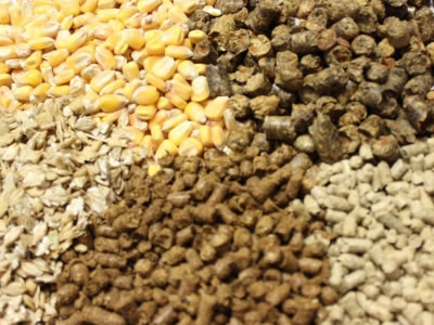 Drought-stricken German animal feed farmers get gov't help