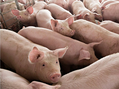 China's African Swine Fever Outbreak: Potentially large implications for China and the world pork trade