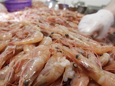 Vietnam giant tiger prawn prices rise in July