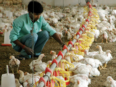 Speed bumps ahead for India's poultry boom?