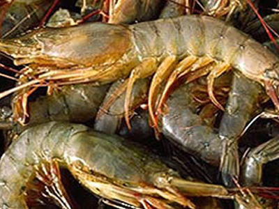 US shrimp trade deficit balloons to $6.4B in 2017