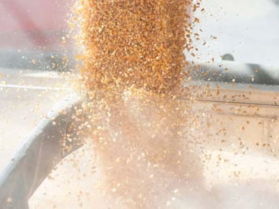 US Grains Council calls for commitment to trade partnership following Mexican elections