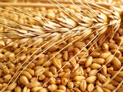 Egypt turns away Russian wheat shipment