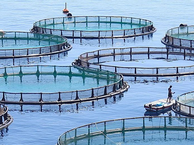 Aquaculture's high wire act: Rising production, stable costs defy tight input supplies
