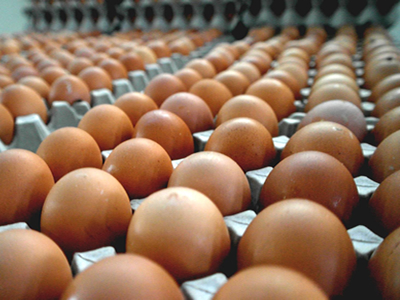 New frontiers in egg supply, demand and marketing