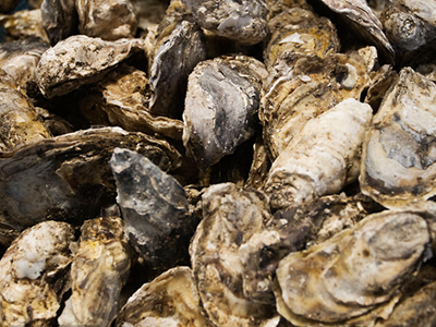 Oyster virus detected in South Australia