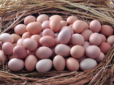 Eggs sold in UK to soar to 180M this Easter weekend
