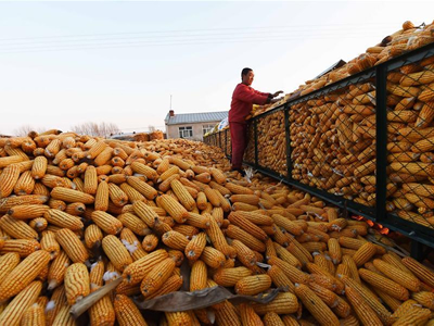 The USDA trashes its China corn statistics and life goes on - or does it?
