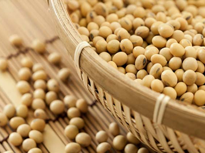 US soybean exports to China see drastic fall