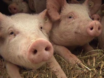 More countries may ban China pork imports to arrest spread of ASF