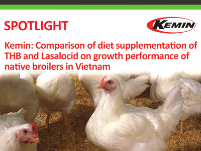Kemin: Comparison of diet supplementation of THB and Lasalocid on growth performance of native broilers in Vietnam
