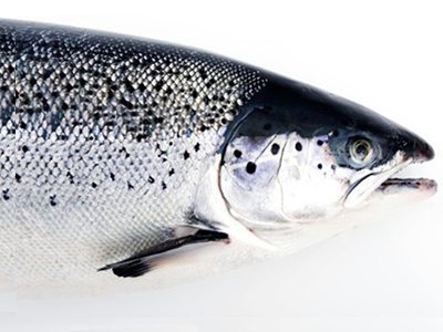 Norway's 2018 seafood exports hit record US$11.6B