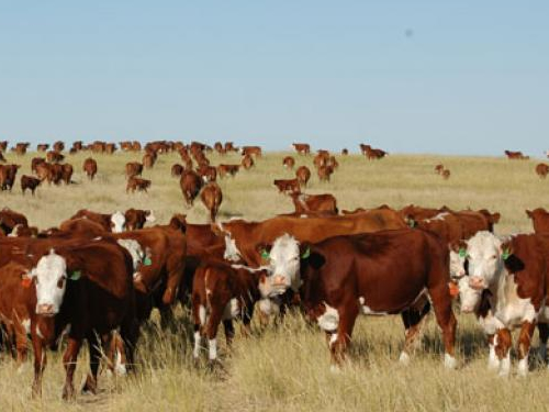 World beef's slow growth and rapid transformation