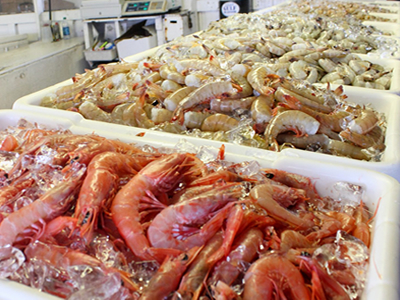 US refusals of seafood imports at historically low level in June