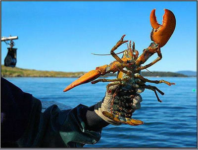 Gov't aid fund urged for US$1.5B Maine lobster industry to ease China tariff impacts