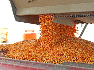 Philippines livestock sector welcomes move to import 300,000 tonnes of corn at zero tariffs