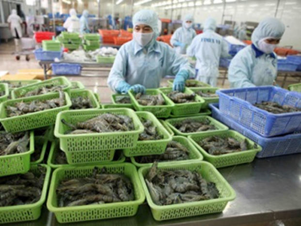 China shrimp imports from Vietnam see drastic fall