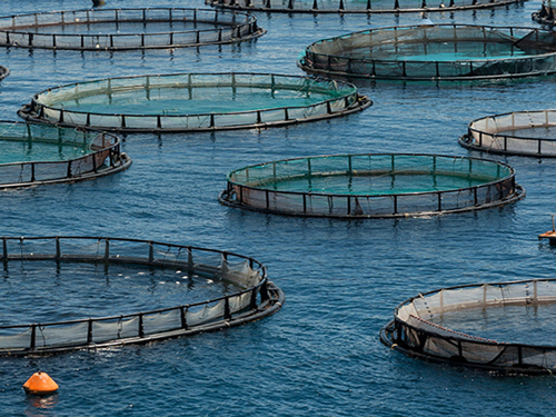 Nature's limits re-emerging: A snapshot of world aquaculture in 2019